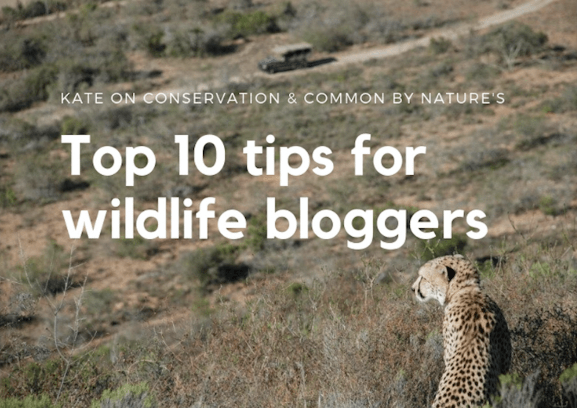 Top 10 Tips for Wildlife Bloggers, with Common by Nature