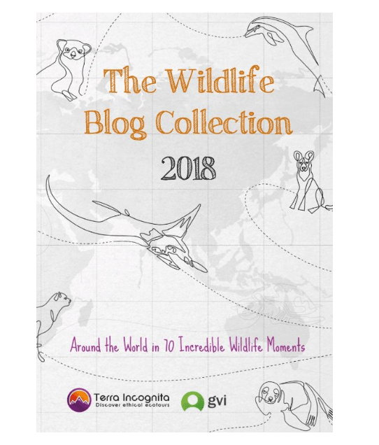 Wildlife-Blog-Collection-2018-featuring-Kate-on-Conservation