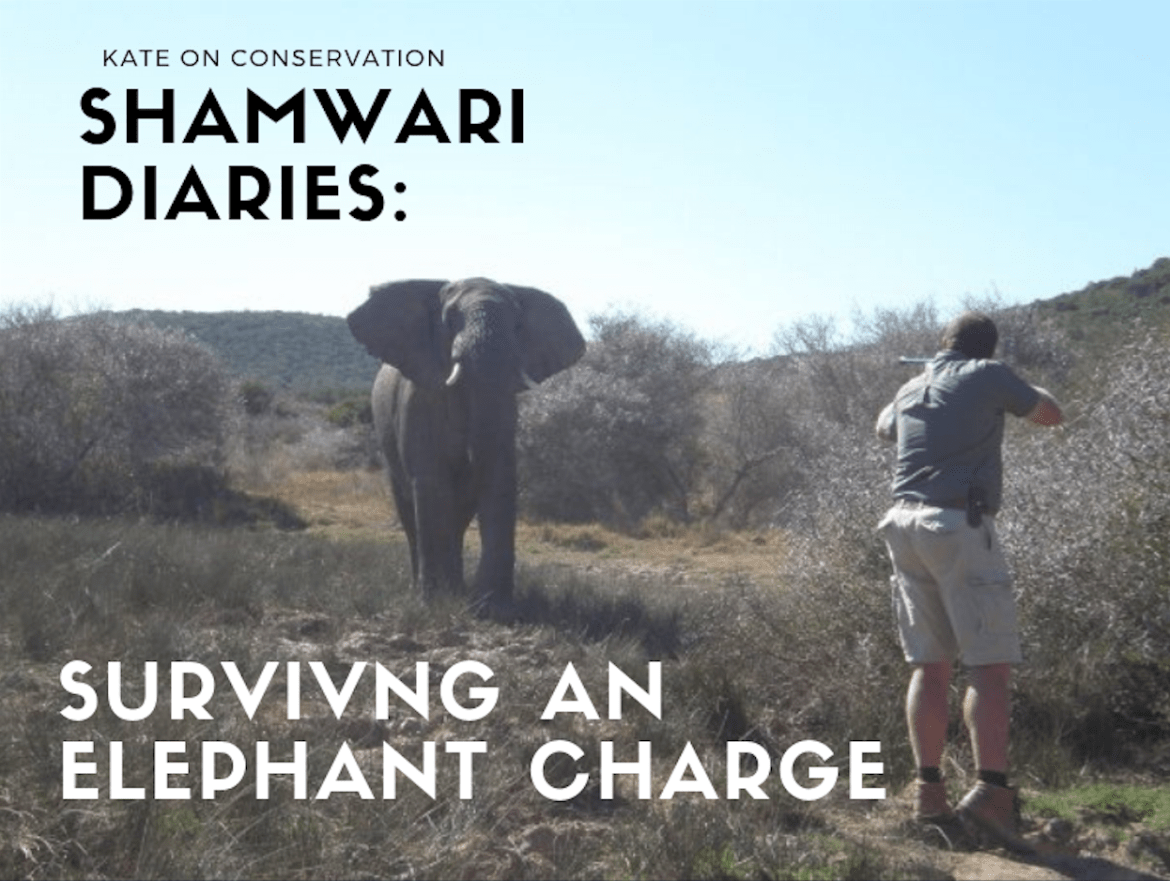Shamwari Diaries: Act 1, Scene 5 – Surviving an elephant charge and a 216 metre jump!