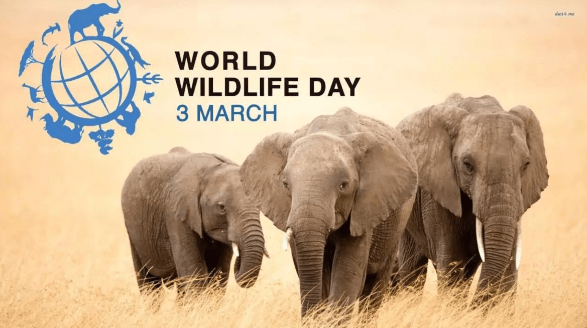 A vision for UN World Wildlife Day 2019 – Shamwari Diaries: Intermission