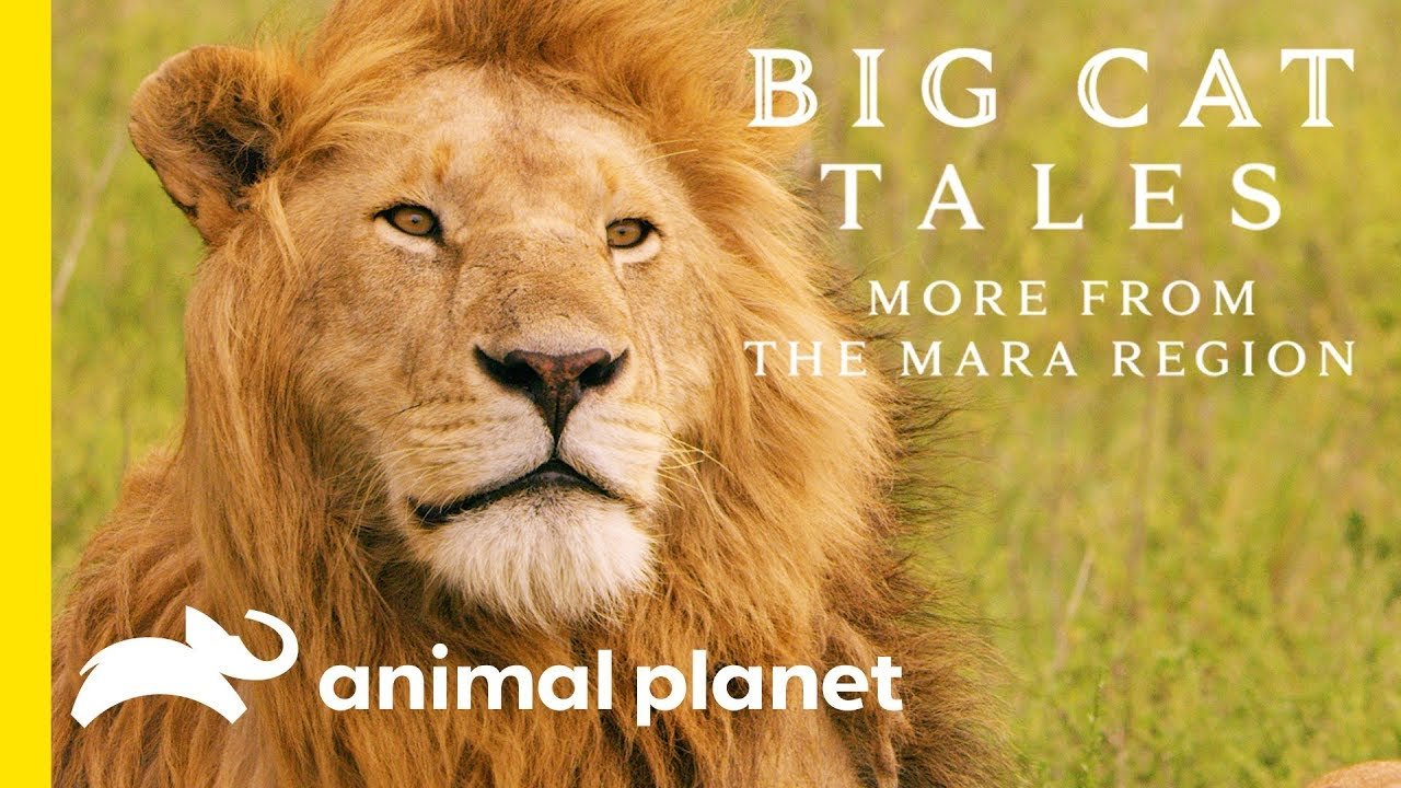 Big Cat Tales - Animal Planet