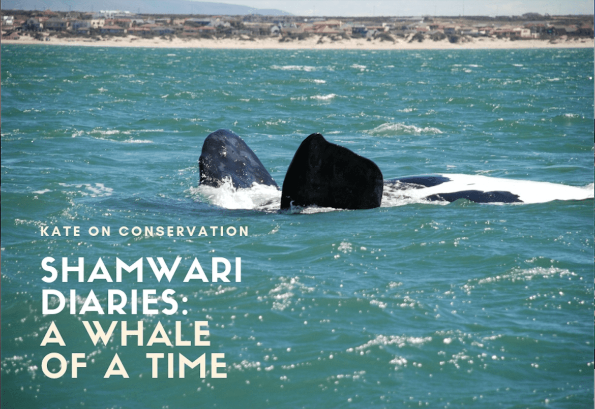 Shamwari Diaries: Act 2, Scene 4 – A whale of  a time
