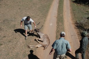 Shamwari diaries - a kudu with a leg injury is being checked over