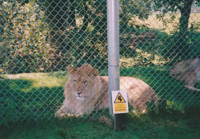 Shamwari Diaries: Interval -- Big Cats in captivity | Kate