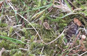 Bug Safari harvestman daddy long legs