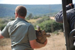 jaco-on-the-game-drive-at-shamwari-south-africa