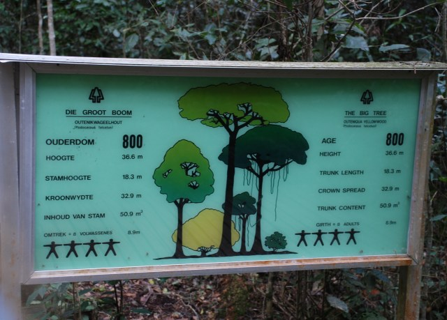 Largest-tree-in-South-Africa-info-board.