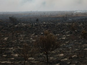 Aftermath-of-controlled-burn-at-Shamwari