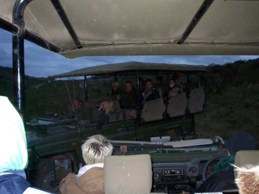 a-cold-and-rainy-game-drive-in-shamwari