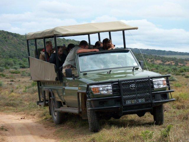 shamwari-team-wildlife-watching