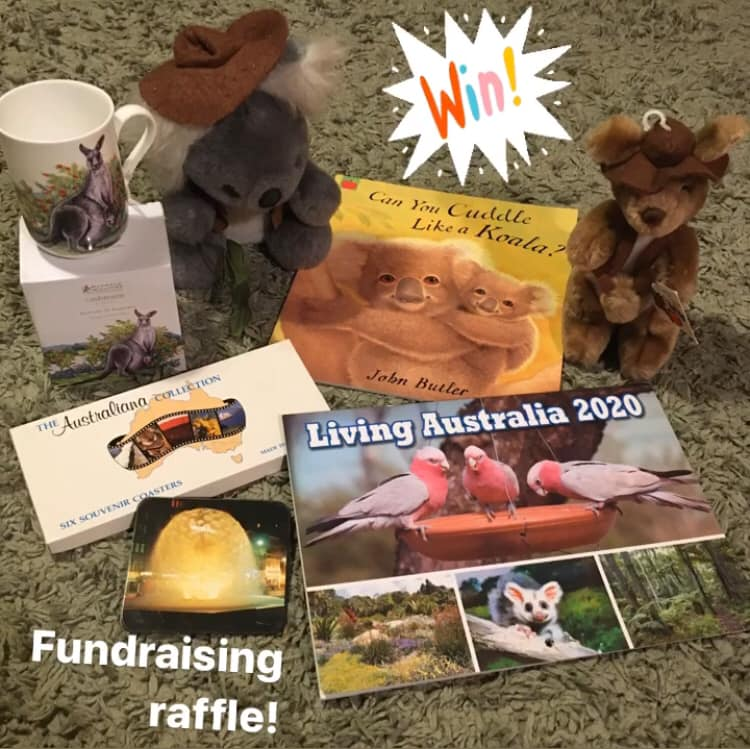 Fundraising for Port Macquarie Koala Hospital