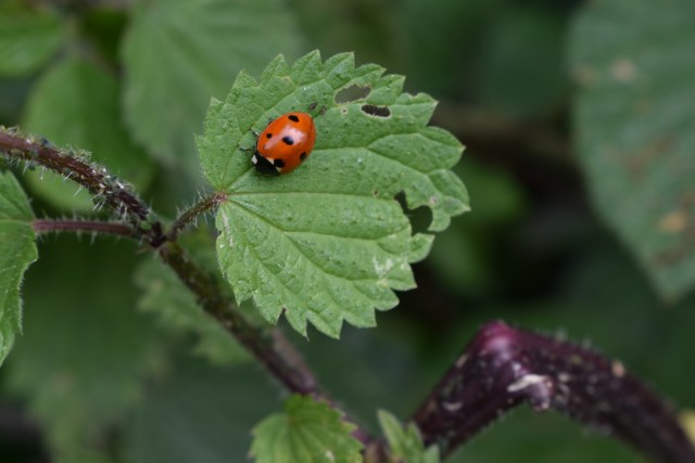 Ladybird-image-by-Kate-on-Conservation