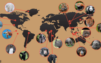 Endangered-Species-around-the-world-map