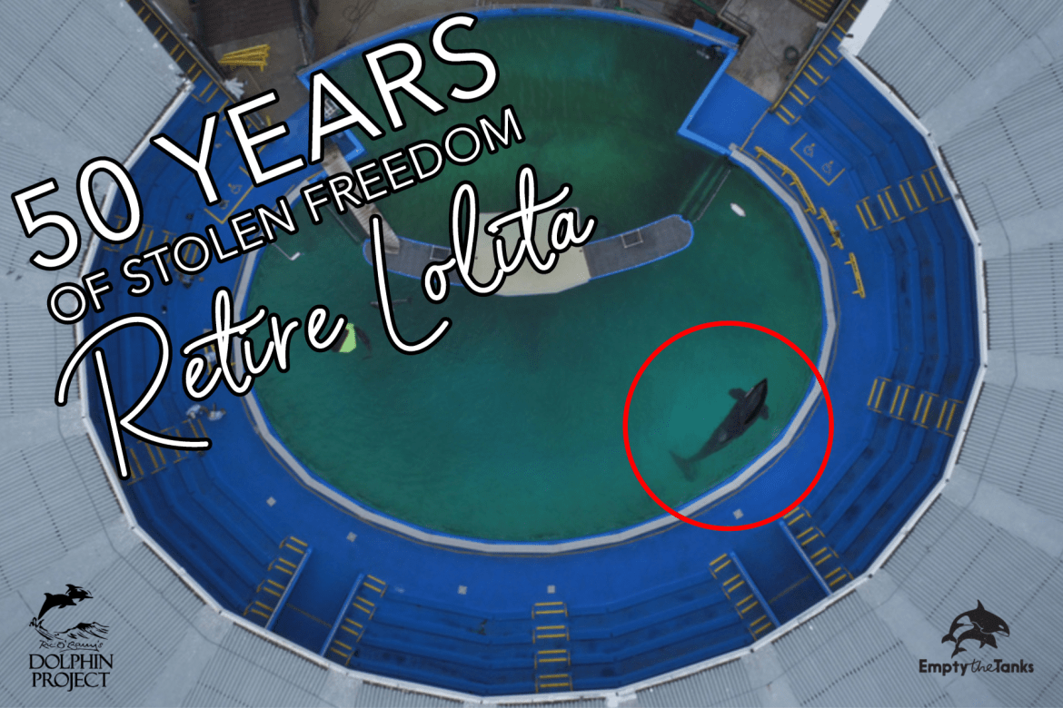 Retire-Lolita-50-years-in-a-tank