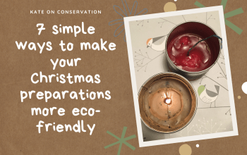 7-simple-ways-for-an-eco-friendly-Christmas