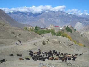 Nepal 2008 2 472