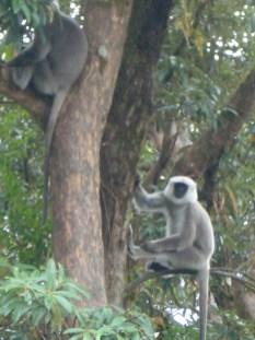 Nepal 2008 3 187