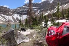 Trail Dog Gear