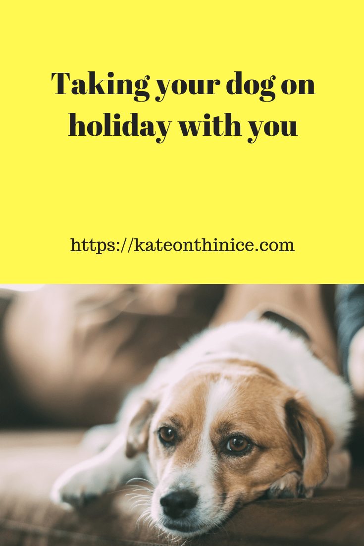 Taking Your Dog On Holiday With You