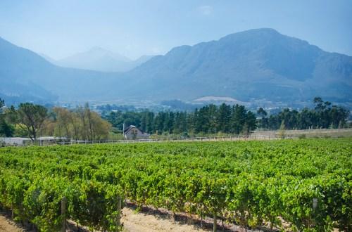 Wine Storage Companies