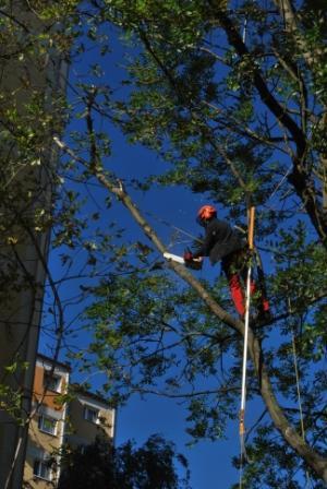 Arborysta w trakcie pielęgnacji drzewa po październikowych wichurach. W ręce piła u pasa zwisa zaś lanca.