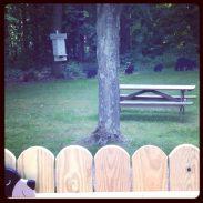 """Shadow Bears on KatersAcres Deck, """"Bear Junction"""""""