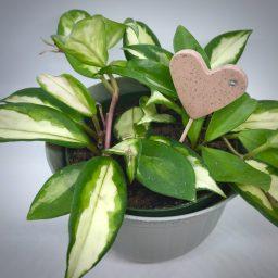 Polymer Clay Heart Plant Tag Pokey