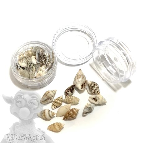 Ocean Sea Shell Mini Jar from Kater's Acres