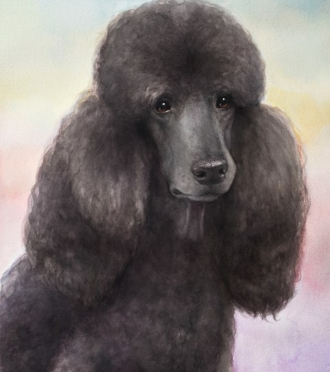 Custom WATERCOLOR Pet Portrait On SOLID Background