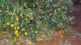 yummmy grapefruits from Bots Nana
