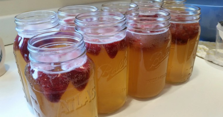 How to Make Kombucha for Beginners
