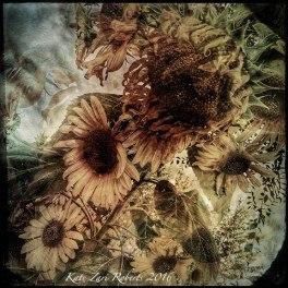 sunflower-medley