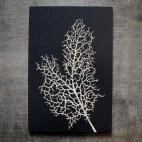 "Coral - 4x6"" Wood Engraving"