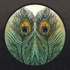 Peacock Feathers - Digital Illustration