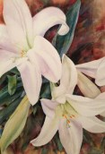 """Easter Lilies • 22"""" x 15"""" watercolor on 300 lb. Arches"""