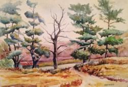 "White Pine • 12"" x 16"" Watercolor/140 lb. Arches"