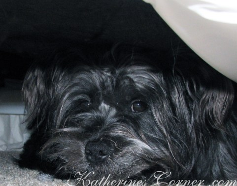 puppy hide out katherines corner