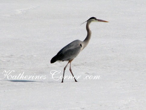 heron in the snow Katherines Corner