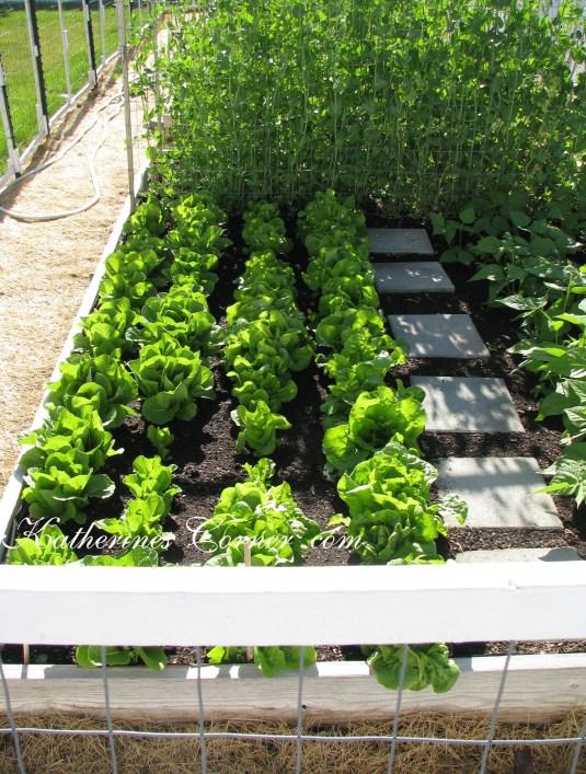 lettuce and peas katherines corner