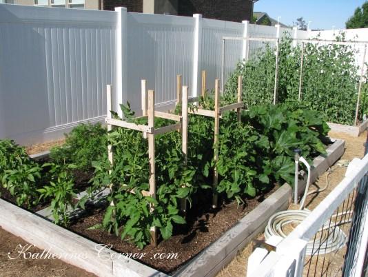 tomato cages katherines corner