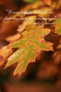emily bronte leaves