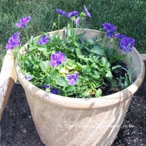 container garden perennials