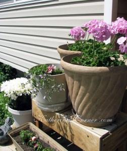 geranium planters