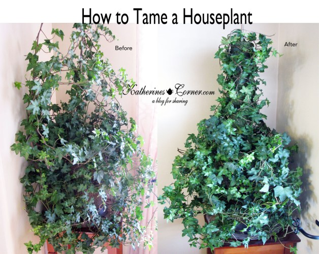 how to tame a houseplant_katherines_corner