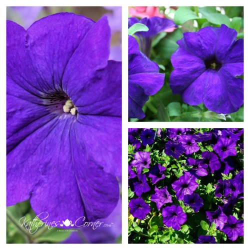 should I break up with facebook purple petunias
