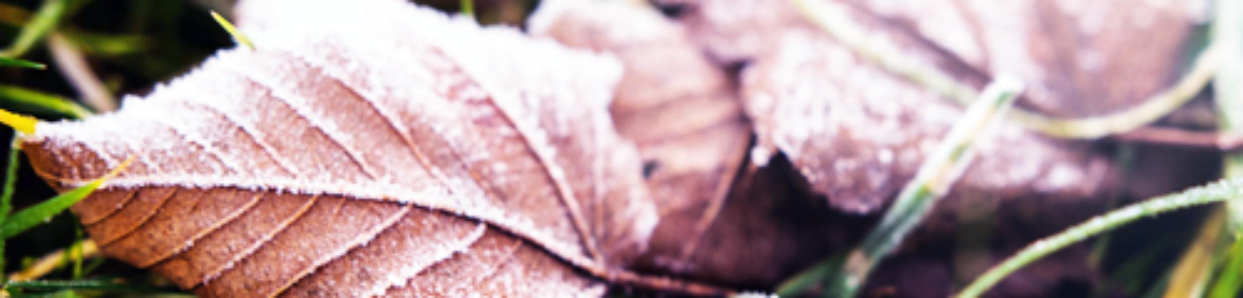 autumn slider leaves kcb