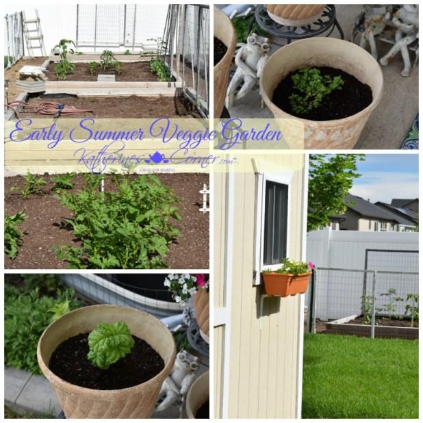 early summer veggie garden