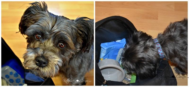 izzy checks his road trip bag