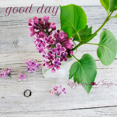 a good day lilacs