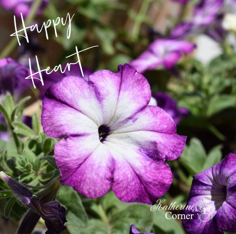 purple petunias katherines corner